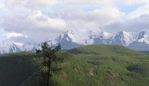 На Алтае климат умеренно резко-континентальный